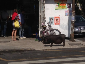 And if all else fails, seeing a potbellied pig on the streets made the trip worthwhile.