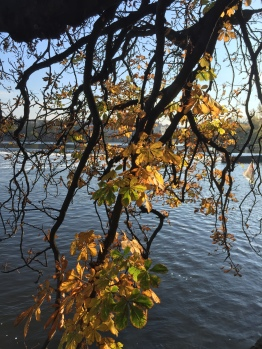 Leaves turning on the Vlatava river