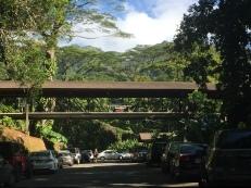Arriving at the Manoa Falls parking lot