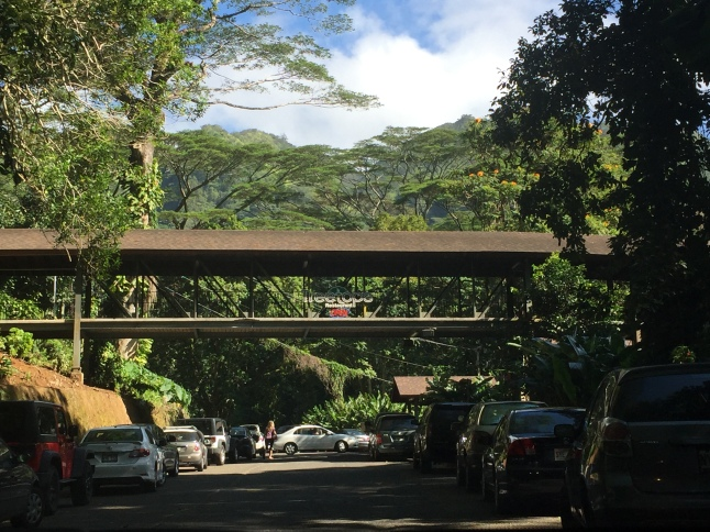 Arriving at the Manoa Falls parking lot