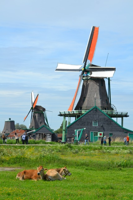 Windmill and cows