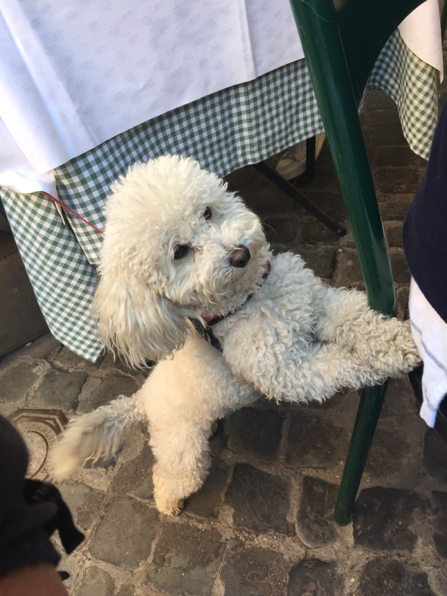 The super cute dog at the neighboring table, who clearly wanted some of my pici