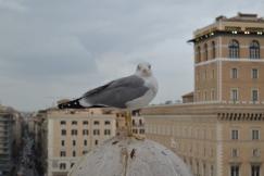 A scowling seagull atop the Altare della Patria
