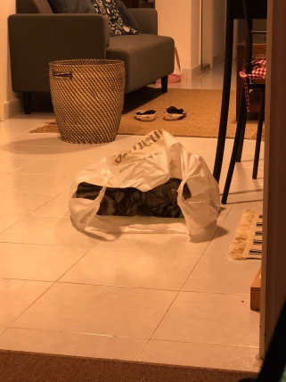 Baobao likes my shopping bag