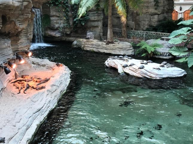 The gators
